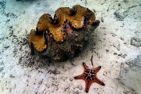 Crackdown Could Help End Giant Clam Poaching in Critical Reefs