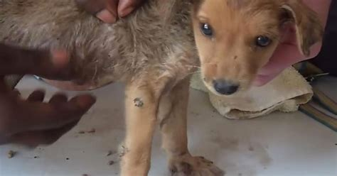 Sickening moment 120 worms burst out of puppy's skin