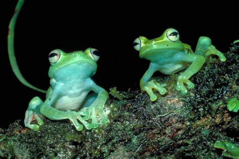 New exhibit 'Frogs: A Chorus of Colors' to open at Academy
