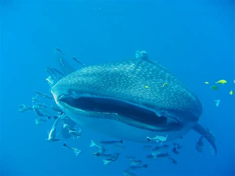 whale shark   that one was an 8