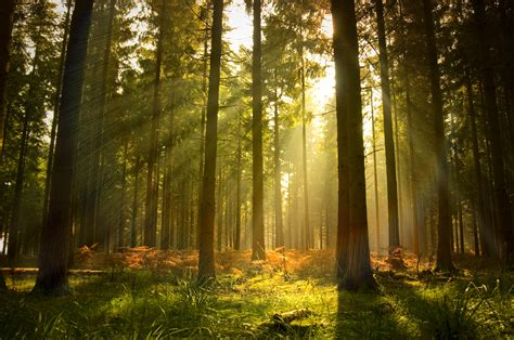 Talking Biotech: Can biotechnology help protect forests