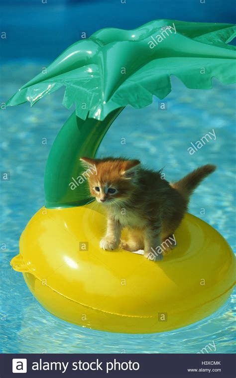 Swimming pool, cat, young, sit, palm island, pneumatically